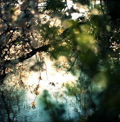 j-p-g:  *Spring Sight (via **shutter-girl)