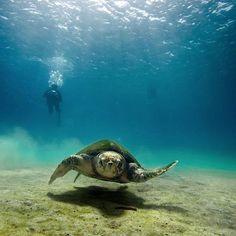 Elisabetta Dami ONLUS: un aiuto concreto per difendere le tartarughe marine