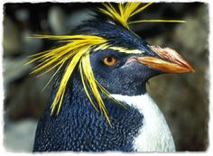 birds with long head feathers - Google Search