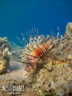 Afbeeldingsresultaat voor onderwaterfotografie