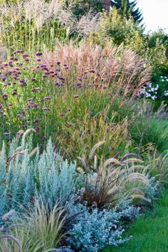 Mixing together different types of ornamental grasses always creates a visually terrific contrast in the landscape. This lovely border is a perfect example of that where decorative grasses of differen (Diy Garden Borders) Source by lovepigeons Prairie Garden, Garden Cottage, Garden Types, Miscanthus Sinensis Silberfeder, Pennisetum Setaceum, Jardim Natural, Xeriscaping, Garden Borders, Ornamental Grasses