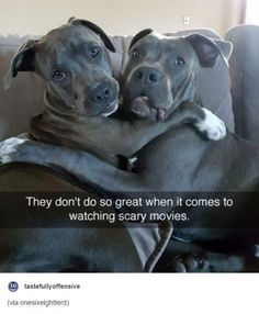 Funny Dogs Hugging