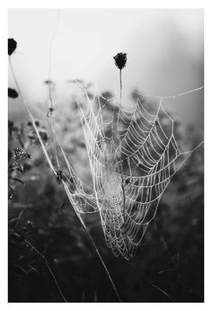 Nature's magic on a foggy autumn morning... All photographs are printed on premium quality, archival paper for a photograph with sharp details, and stunning colors that will last a lifetime.