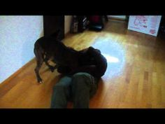 Welcome home soldier! Dog goes crazy when he sees his master return after eight months away…