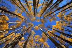 """Looking Up""  Boreas Pass - Breckenridge, Colorado  http://www.natezeman.com/photo/looking-up/#"