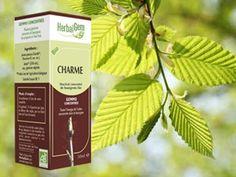 Le bourgeon de Charme est le grand remède de la carence plaquettaire.