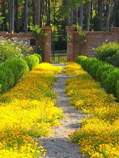 yellow border;)