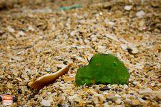 Seashell #tetouan #tetuan #Maroc #marruecos #Morocco #mediterráneo #Mediterranean