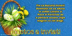 Hristos a inviat! Happy Birthday Quotes For Friends, Motto, Herbs, Herb, Mottos, Medicinal Plants