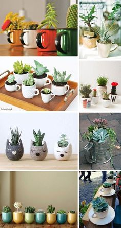 Cactos e Suculentas na Caneca Fun containers to give succulents a life of their own. The post Cactos e Suculentas na Caneca appeared first on Best Of Likes Share.Teacup Mini Gardens Ideas to cOne day I hope to have a colleIdeas que mejoran tu vidaThe