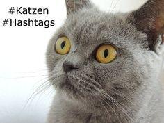 Twitter Facebook und Instagram sind soziale Netzwerke die hashtags benutzen. Interessierte Nutzer können mit hashtags themenspezifische Artikel einfacher finden.