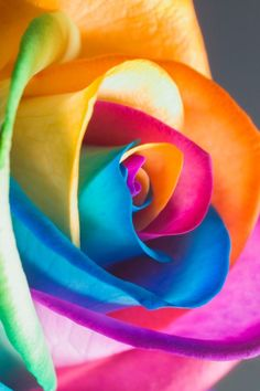 Colorful roses its like a rainbow in the sky Rainbow Flowers, Rainbow Colors, Rainbow Art, World Of Color, Color Of Life, Beautiful Roses, Beautiful Flowers, All The Colors, Vibrant Colors