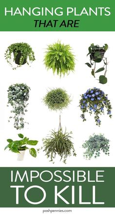 absolute best list of practically immortal indoor hanging plants that you can't kill no matter how hard you try.The absolute best list of practically immortal indoor hanging plants that you can't kill no matter how hard you try. House Plants Decor, Garden Plants, Veg Garden, Easy House Plants, Vegetable Gardening, Succulents Garden, Gardening Tools, Garden Boxes, Air Plants