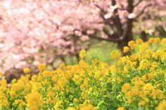 prettylittleflower:    warmth of spring (by joytrip*)