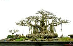 蔓が垂れ下がった姿が印象的な木をメインとした大型作品です。 積み重なった岩や雑草・コケの生えたラフな感じが自然体で素敵です。