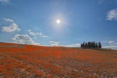 Sun Indie by Matteo Fortunato on 500px
