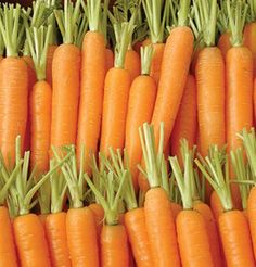 SWEET Napoli carrot seeds 100 seeds non GMO kids garden container garden contain. - SWEET Napoli carrot seeds 100 seeds non GMO kids garden container garden container growing VICTORY g Source by etsy - Garden Seeds, Planting Seeds, How To Plant Carrots, Garden Netting, Carrot Seeds, Organic Seeds, Autumn Garden, Spring Garden, Amazing Gardens