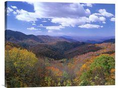 Deciduous Forest in the Autumn from Thunderstruck Ridge Overlook, Blue Ridge Parkway, North Carolina
