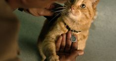c9852c88 Everything You Need to Know About Captain Marvel's Goose the Cat |  PEOPLE.com Cat
