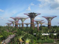 Intern in Singapore this summer.  The deadline for Berkeley Global Internships is MONDAY, March 3! [Photo by Stanley Cheng] #summer #singapore #greenenergy #trees #berkeleyglobalinternships #intern