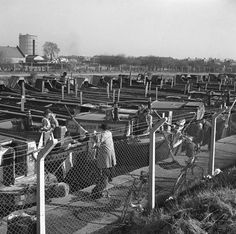 """Captioned: """"#Canal #barges at #Bulls #Bridge lay by, #Southall, #London, 1950.""""   #narrowboat #british #waterways #grand #union #boatmen"""