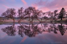 First Blush by Michael Ryan. Marin County, California, USA