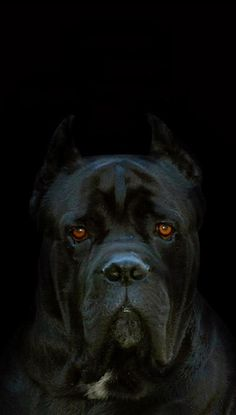 Beautiful soulful eyes piercing through velvety darkness.