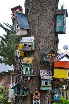 Bird houses, lots of them!