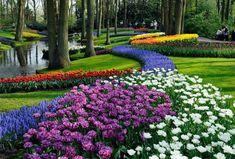 Jardins de Keukenhof, Holanda