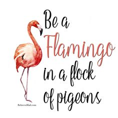 Be a flamingo in a flamingo in a flock of pigeons