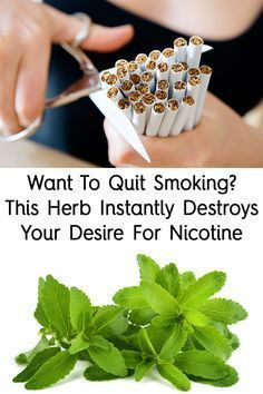 Quitting smoking can be extremely challenging, because nicotine causes addiction. In time, the body gets used to nicotine and becomes unable to function Stevia, Herbal Remedies, Health Remedies, Natural Remedies, Home Remedies, Holistic Remedies, Health Tips, Health And Wellness, Women's Health