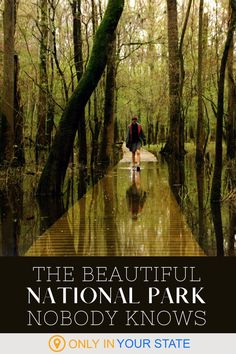 This park is a hidden gem of the national parks system. Find out why South Carolina's Congaree National Park should be on your U.S. bucket list. Beautiful Places To Visit, Cool Places To Visit, Places To Travel, Canoeing, Kayaking, Congaree National Park, National Parks Usa, Adventure Travel, Family Adventure