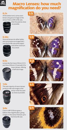 Cheat Sheet: Macro Lenses - How much magnification do you need>