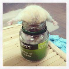 Hamster in a Bottle - Dwarf Hamster Blog