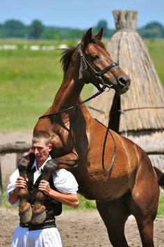 Magyar (Hungarians) were created by God to sit on horseback