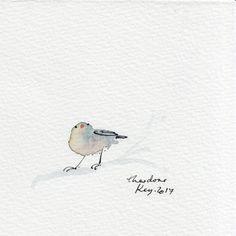 Theodore key Illustration. www.theodorekey.com Birds