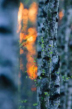Nature Photo Blog - 15 European photographers: Sandra Bartocha - Delicate