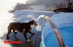 Radass Daily 11/14/12 [45 PICS] - Radass.com
