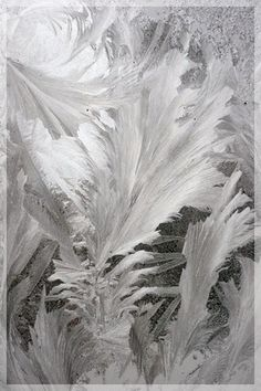 frost, not feathers   Flickr - Photo Sharing!