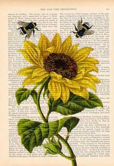 Gcse Art Sketchbook Title Page Natural Forms Trendy Ideas Bee Drawing, Bee Painting, Sunflower Art, Sunflower Images, Newspaper Art, Book Page Art, Arte Sketchbook, Bee Art, Dictionary Art