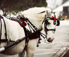 Riding a sleigh listening to sleigh bells ring while it snows! All The Pretty Horses, Beautiful Horses, Country Christmas, Merry Christmas, Winter Christmas, Christmas Ideas, Victorian Christmas, Christmas Inspiration, Winter Holidays
