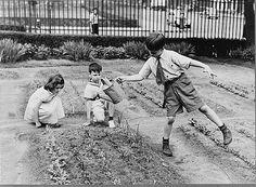 Children work in their school's World War II victory garden. (Library of Congress)