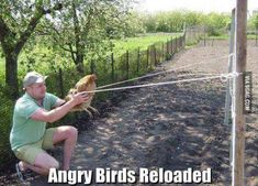 Angry birds, new version