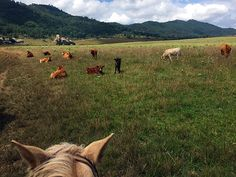 Riding the Valley of the Enigmas in Central Western Mexico's Sierra Madre Mountains, about a two-hour drive south of Guadalajara, the lesser-visited Pueblo Mágico of Tapalpa is a beautiful place to saddle up and step back in time. #mexico #horseback