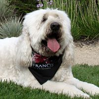 Max, 2011 Winery Dog of the Year from St. Francis Winery & Vineyards
