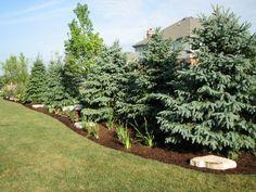 privacy landscape ideas   Existing Home Landscaping - Elemental Landscapes Ltd.