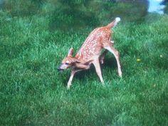 Bambi's baby.