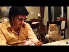 CAT BEGGING ELVIS TO SING