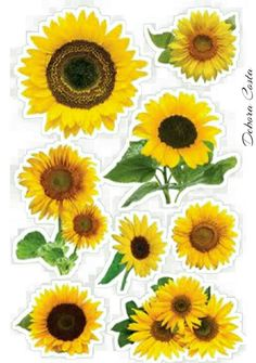 Tortilla, Scrap, 3d, Plants, Paper Sunflowers, Sunflower Party, Tags, Crafts, Flowers