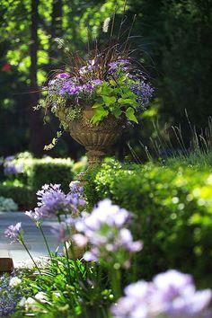 Beautiful garden: #Lavender and #Greens. Source: http://judyscottagegarden.blogspot.com/p/container.html